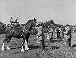 [Cerrigydrudion Show (Uwchaled Agricultural Society)]