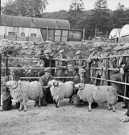 [10th Annual Sale of mountain rams at Dolgellau]