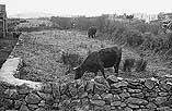 [Sm allholdings falling into disrepair near Tre-garth, Caernarfonshire]