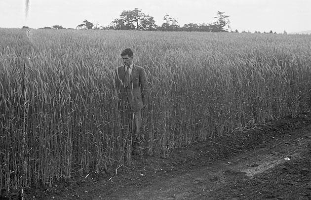 [Impressive farming crops in Montgomeryshire