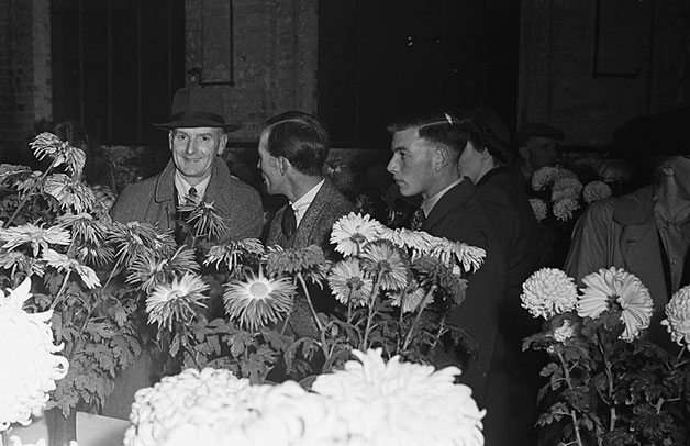 [Wem Chrysanthemum Show, 1948]