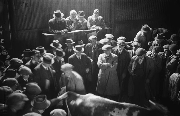 [Messrs Bob Parry's cattle auction at Caernarfon]