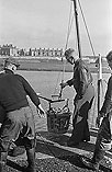 [Unloading and packing a haul of fish at Holyhead]