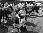 [Oswestry Agricultural Society Annual Show]