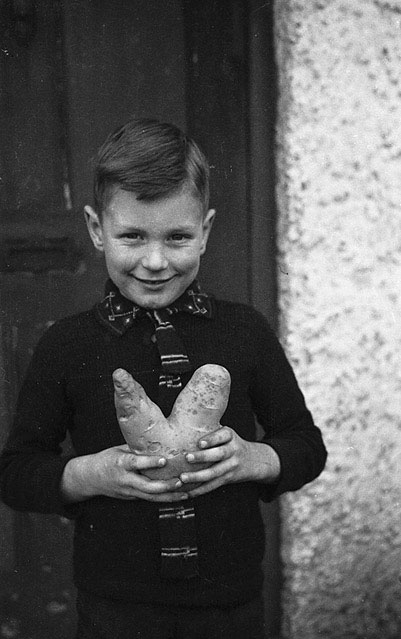 "[Ian Williams of Trewern, Welshpool who dug up a ""V-shaped"" for victory potato]"