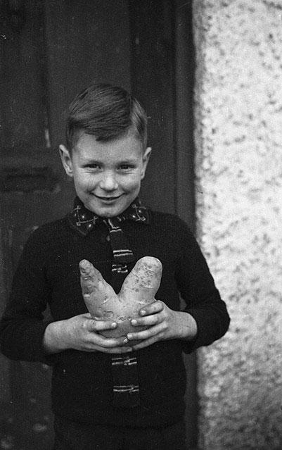 "[Ian Williams of Trewern, Welshpool who dug up a ""V-shaped"" for victory potato]"
