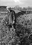 [W E Parry, Braichceunant, Glanllyn, Llanuwchllyn - The Hedge Trimmer]