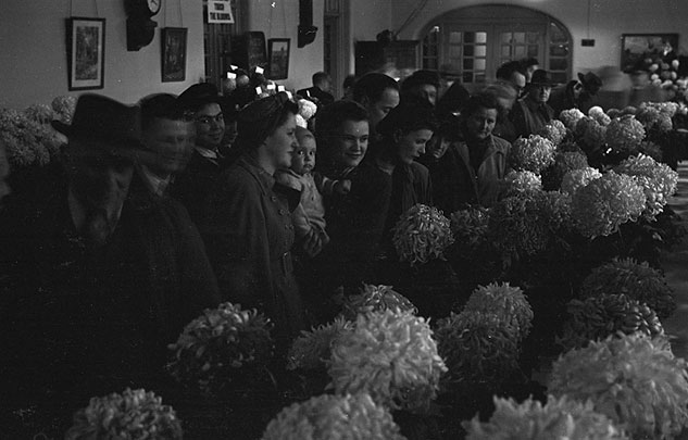 [Deeside Chrysanthemum Society Autum Show, 1949]