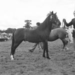 A horse at an unidentified agricultural show