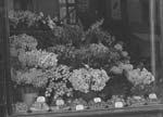 """[""""Avondale"""" florists shop]"""