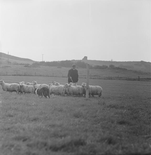 North Wales Sheepdog Trials, Llandudno