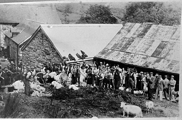 Copies of old photographs of sheep shearing and of a burned-out farmhouse