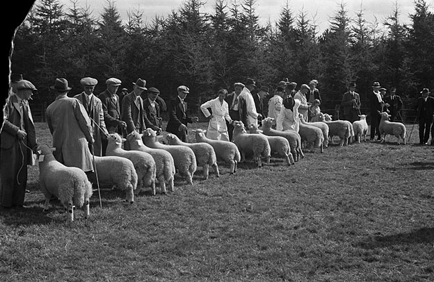 [Kerry Hill Sheep Flock Book Society show and sale]