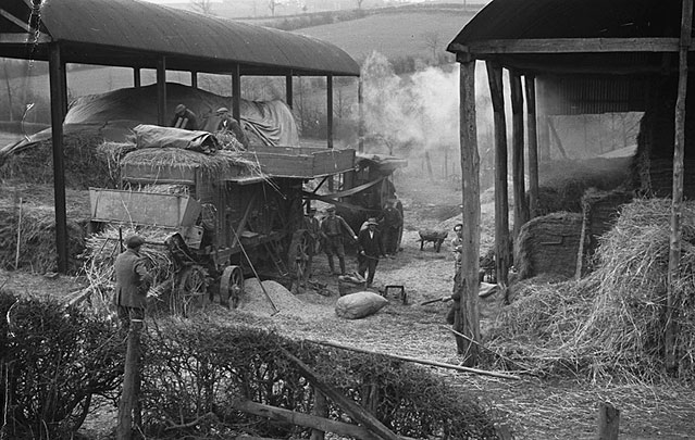 "[Threshing last years ""Dig For Victory"" wheat harvest at Pinion, Llandyssil]"