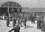 [Hall, Waterbridge and Owen's horse sale at Shrewsbury]