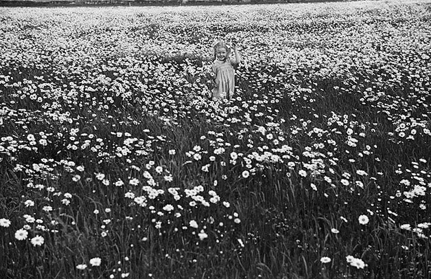 [Unidentified girl collecting flowers - possibly Geoff Charles' daughter]